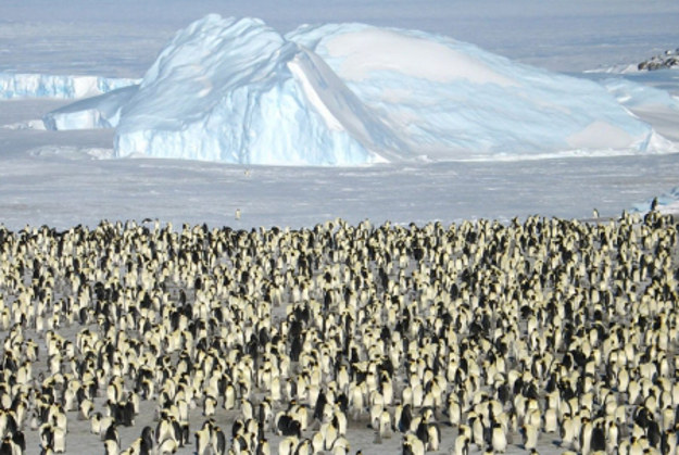 Take a short flight to Atka Bay to visit a large Emperor Penguin colony.