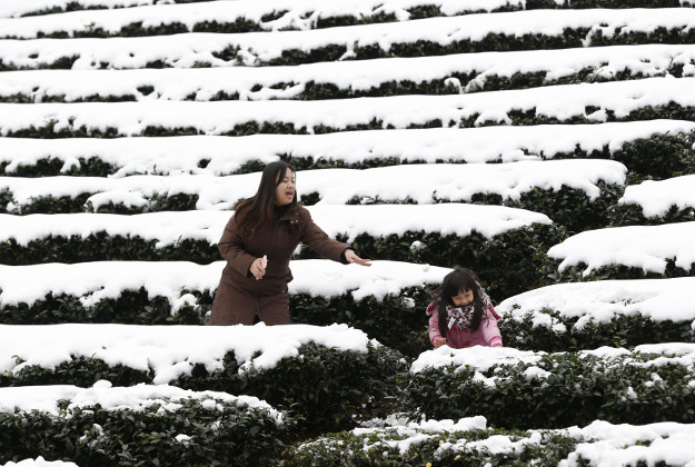 A mother and daughter play in the light snowfall on a tea plantation in the Pinglin mountain area of New Taipei City, Taiwan, Monday, Jan. 25, 2016. An unusually cold weather front that caused sudden drops in temperatures has been blamed for killing a number of people in Taiwan's greater Taipei area.
