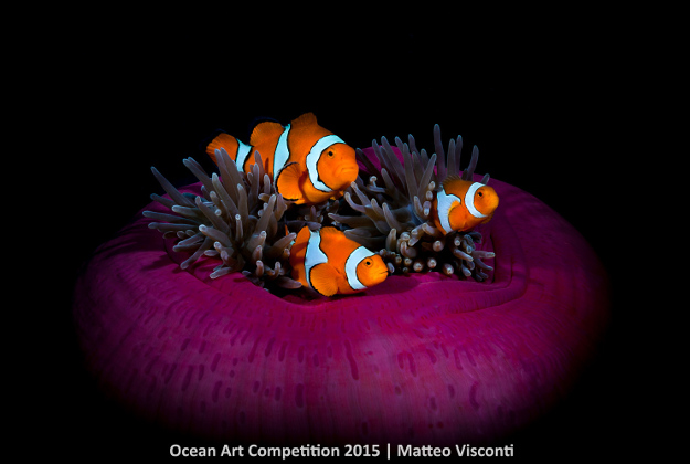 """Nemo is in Da House"". 2nd Place - Wide Angle. Matteo Visconti Shot in Kimbe Bay, Papua New Guinea with Canon 5D Mark II"