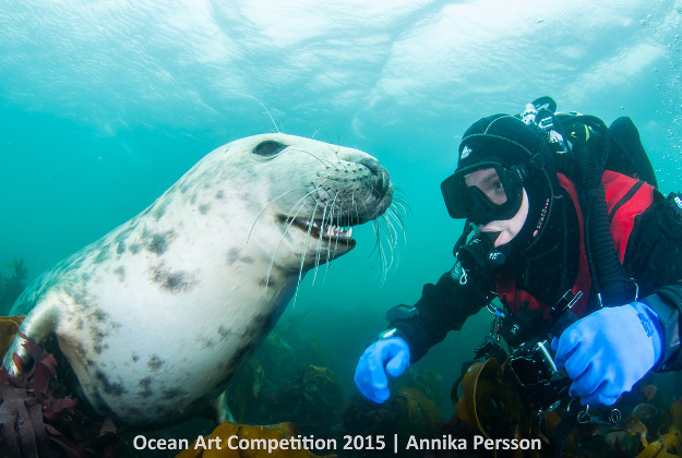 """Friends"" 3rd Place - Annika Persson Shot at Farnes Island, United Kingdom with Nikon D300"