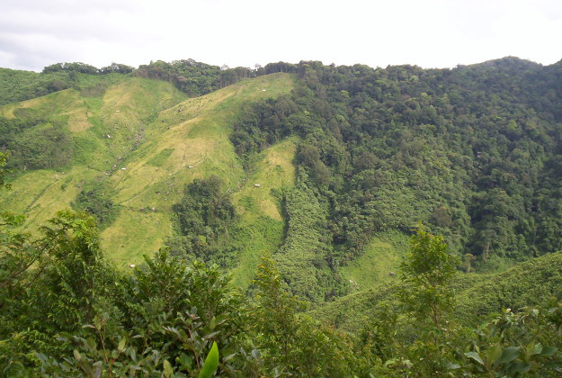The jungles of Northeast India.