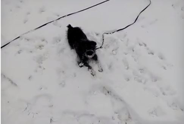 A doggy enjoys the unfamilar snow in Tennessee