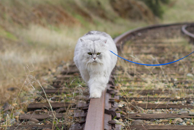 Gandalf hits the open road and shows his balancing skills on some train tracks