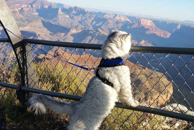 Gandalf at the Grand Canyon