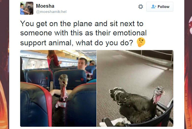 A Twitter user posted photos of a turkey on a commercial flight.