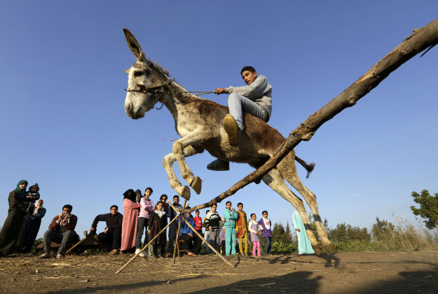 Egyptian farmer Ahmed Ayman, 14, rides his trained donkey as he jumps over a barrier in the Nile Delta village of Al-Arid about 150 kilometers north of Cairo, Egypt. He discovered the donkey's talent after she jumped over a small irrigation canal.