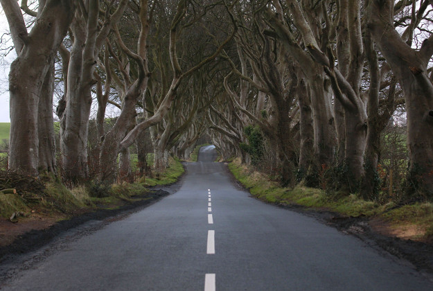 New road markings are seen at Dark Hedges, Bregagh Road, Armoy, Northern Ireland, Wednesday, Feb. 10, 2016. The iconic tunnel of trees that features as the Kingsroad in the smash-hit television series Game of Thrones has been painted with white line road markings in error by a contractor.