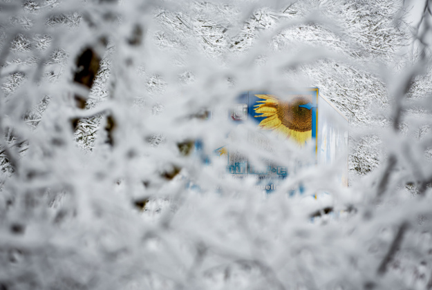 In this Feb. 23, 2016 photo the image of a giant sunflower on the side of a truck passes by a wintry forest near the Grosser Feldberg mountain near Frankfurt, Germany.