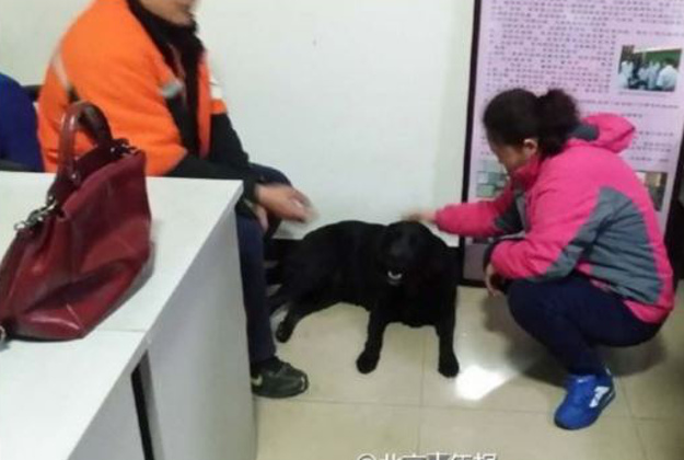QiaoQiao was found with an apology note, outside Beijing