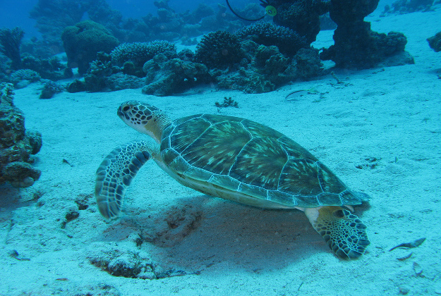 Drones Used To Protect Eggs Of Nesting Sea Turtles