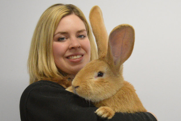 Animal Care Assistant Emma Calder with seven month old continental giant rabbit named Atlas who is seeking a new home.