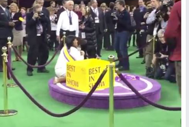 The winners of the Westminister Dog Show