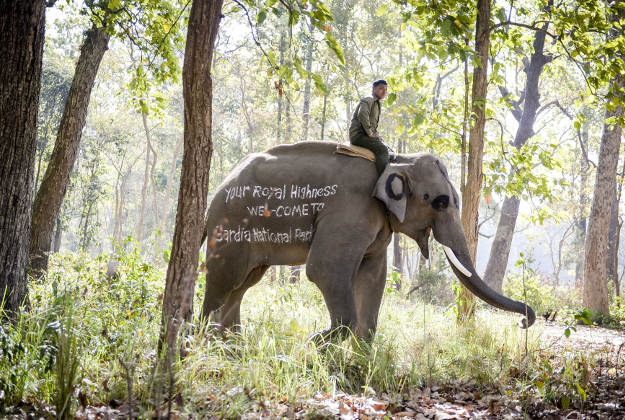 An elephant with a message to Prince Harry at the Bardia National Park, Nepal.