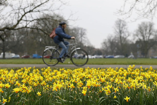 A cyclist passes a display of daffodils growing in a park in London, Monday, March 21, 2016. The Spring equinox started in the Northern Hemisphere on Sunday March 20.