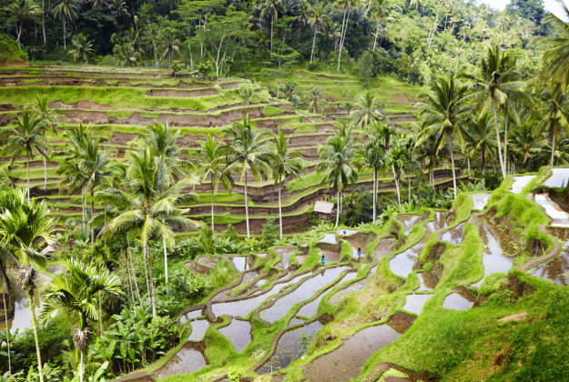 Overview of rice terraces north of Ubud.