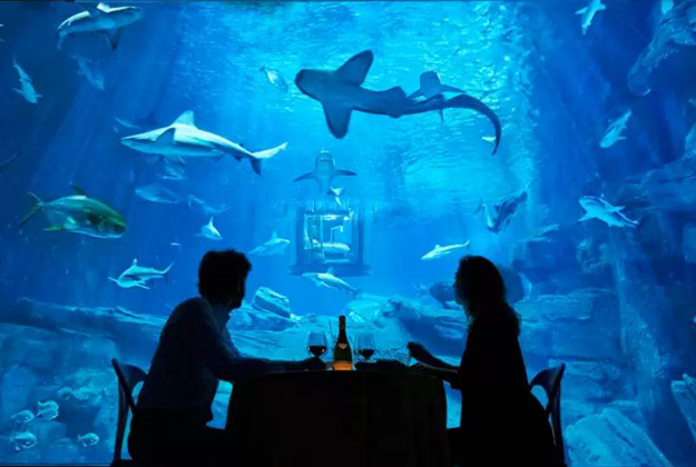 Travellers can win a chance to sleep in the Paris aquarium in an underwater room.