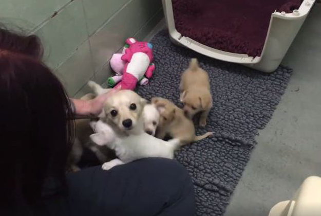 An abandoned mother reunited with her puppies