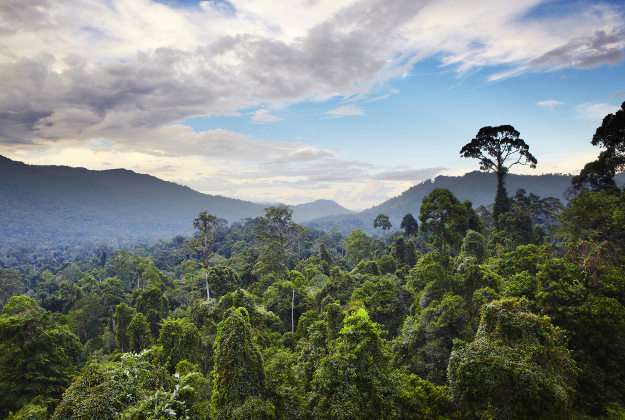 Borneo is second in line  for the skies to darken