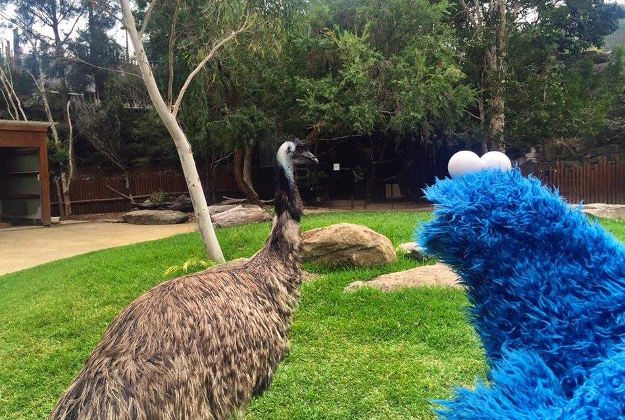 No go with the emu for the blue monster