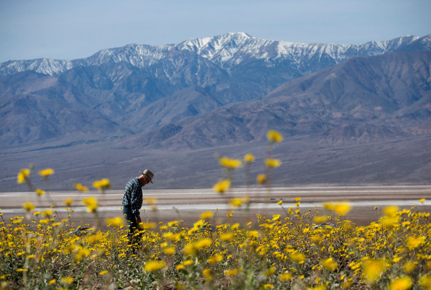 The Badwater Basin in bloom in the Death Valley