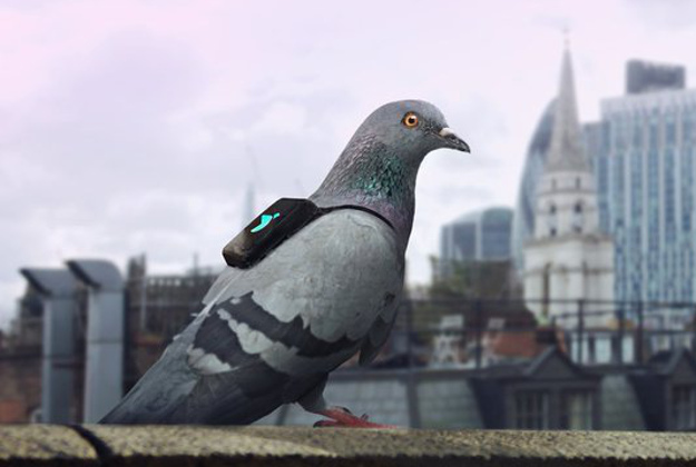 Pigeons were used in WWI and WWII