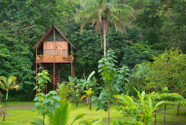 Treehouse in Costa Rica.