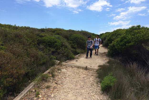 Binded Paths on the Coast Trail Management of trails in the Royal National Park is handled by the New South Wales National Parks and Wildlife Service,