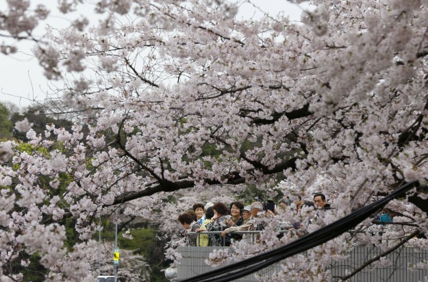 People enjoy blooming cherry blossoms at Chidorigafuch moat in Tokyo, Monday, April 4, 2016. People all over the country go out to see cherry blossoms as the country's iconic flower is full bloom.