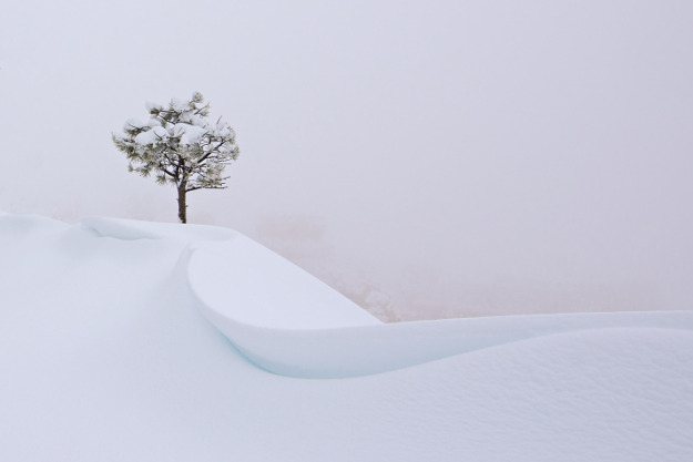 During a snow storm I decided to head over to Bryce Canyon NP and enjoy the freshly fallen snow. Visibility was down to almost zero, but then I found this single tree right next to a snow drift and knew this would be my shot. Location: Bryce Canyon, Utah, United States