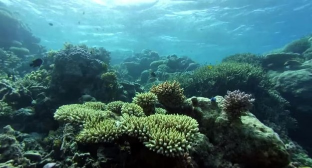 The Great Barrier Reef is experiencing devastating coral bleaching
