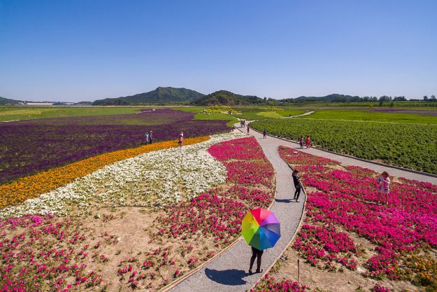 Aerial view of wide area of flowers near Shisanling reservoir in Changping District on May 16, 2016 in Beijing, China. Blooming flowers attracted visitors in Beijing.