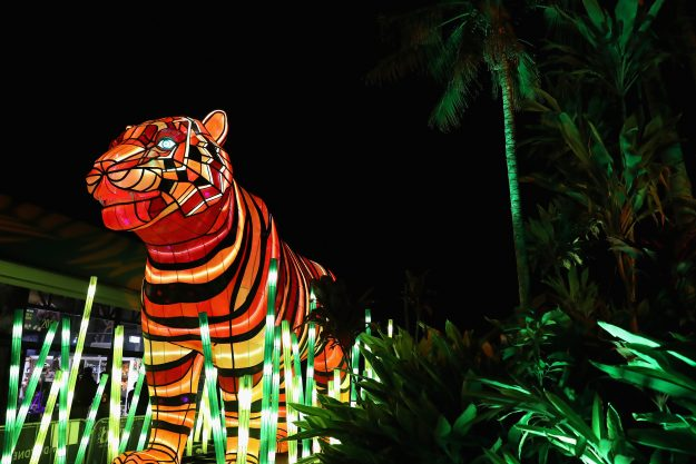 A Sumatran Tiger light sculpture is displayed during a media preview of Vivid Sydney illuminated displays at Taronga Zoo in Sydney, Australia. Image: Cameron Spencer/Getty Images)