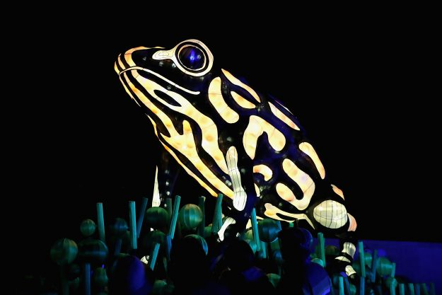 A Corroboree frog light sculpture at Taronga Zoo in Sydney for the Vivid Sydney festival. Image: Cameron Spencer/Getty Images)