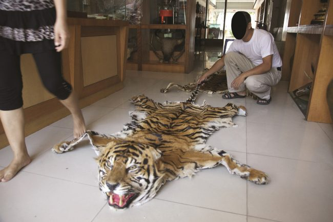 A tiger skin used as a rug. Image: Wildlife Witness/Traffic