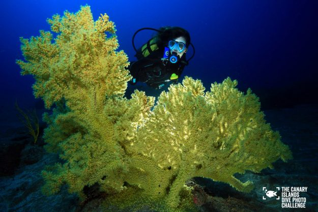 The Canary Islands are holding a dive photo contest.