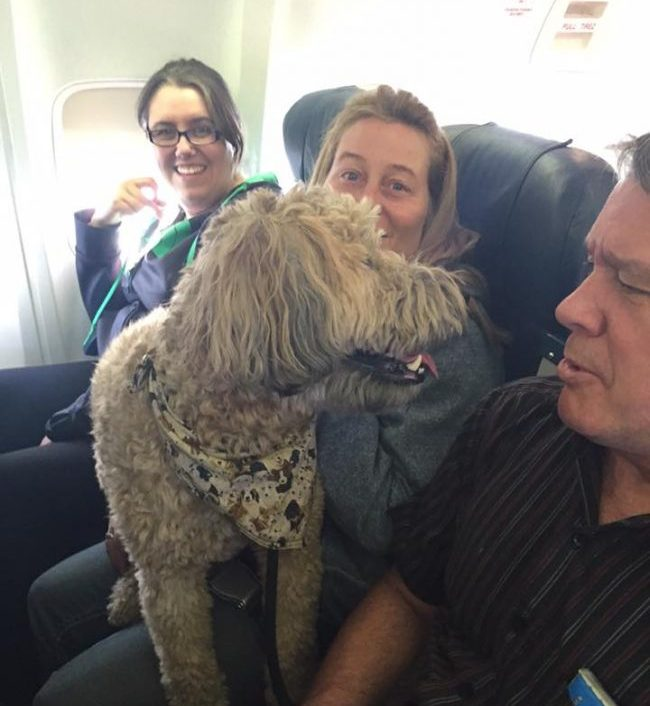 A dog being evacuated from Fort McMurray by Canadian North: Image: Canadian North Facebook