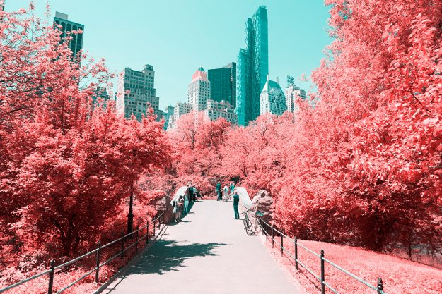 Paolo Pettigiani shows Central Park from a different perspective.