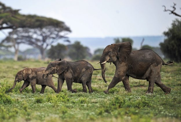 Malawi conservation experts plan mass elephant relocation to protected wildlife reserve