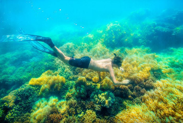 See the Great Barrier Reef with an Airbnb contest.