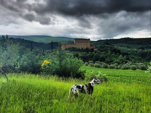 Views of the castle from afar in Tuscany