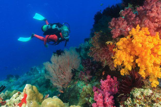 A snorkeller at a coral reef. Image: Stuart Westmorland/Getty Images