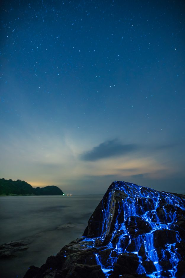 Sea Fireflies Japan