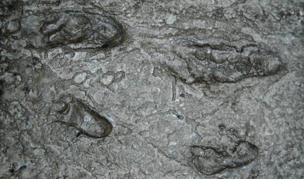 Replica of the Hominid fossil footprints discovered in 1978 in Laetoli.
