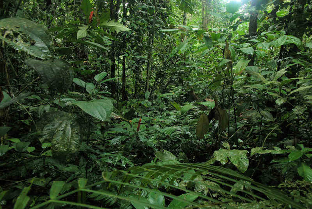 The fauna and flora in Madidi National Park is being catalogued by experts using indigenous people to tell them if produce is edible or not
