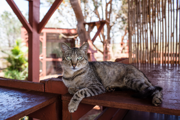 The Lanai Cat Sanctuary has a 25,000 square foot area for the cats to enjoy.