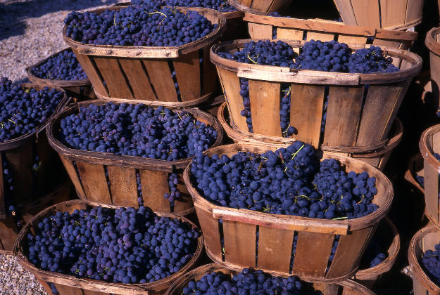 Ready to make your own wine in Bordeaux?