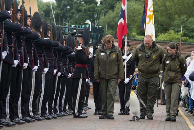 The ceremony at Edinburgh Zoo this week where the king of Norway bestowed a new title on Brigadier Sir Nils Olav