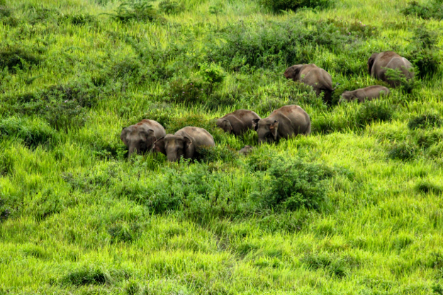 Khao Yai National Park is one of Thailand's most popular national parks.