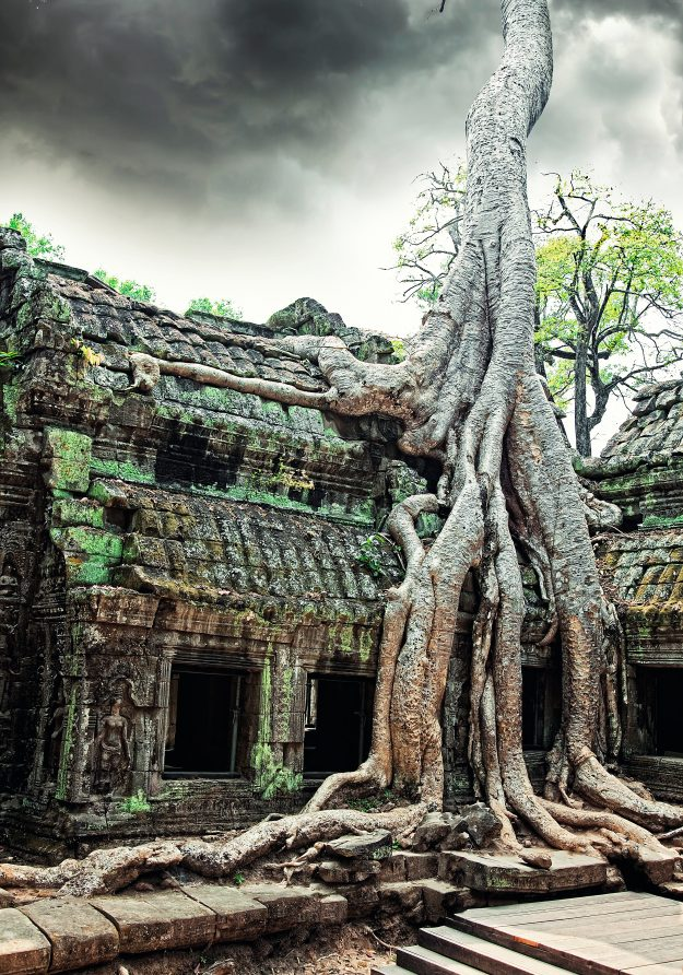 Jungle tree covering the stones of the temple of Ta Prohm in Angkor Wat, Cambodia.