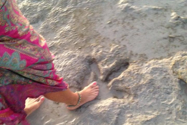 Ms Porth shows her foot next to the dinosaur footprint.